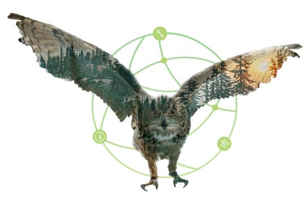 tocogure-owl